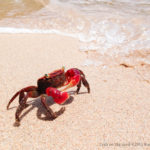 Crab on the sand ©2015 Kunio.Osawa 大沢邦生